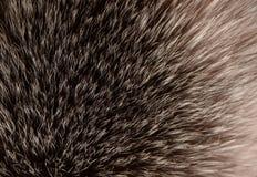 Мех Fox макроса пушистое стоковое изображение rf