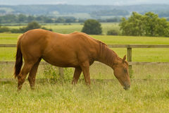 мечтает лошадь s Стоковая Фотография