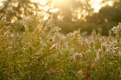мечтательное лето поля Стоковые Изображения