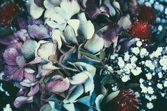 Мечтательные волшебные цветки осени Стоковое Изображение RF