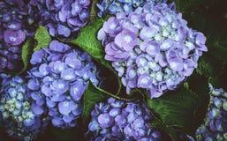 Мечтательные волшебные цветки с темными листьями Стоковое Изображение RF