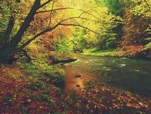 Мечтательный заход солнца над горой в тумане леса осени красочном между деревьями на речных берегах Стоковое Изображение