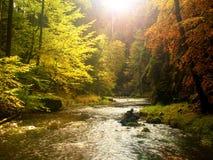 Мечтательный заход солнца над горой в тумане леса осени красочном между деревьями на речных берегах Стоковые Изображения RF