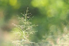 Мечтательный & мягкий расплывчатый фокус маленького цветка травы Стоковое Фото
