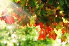 Мечтательная листва осени Стоковые Изображения RF