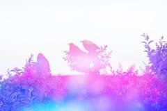 Мечтательная сцена с starlings в сини и пинке Стоковая Фотография