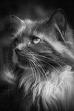 Мечтательное кошачье Стоковые Фото