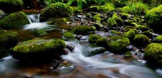 Мечтательное место в шотландском Глене Стоковое Изображение