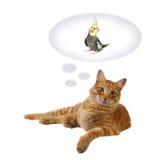 мечтать кота улавливая Стоковая Фотография RF