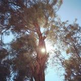 Мечтать под солнцем стоковые фото