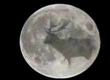 Мечтать луны Стоковые Фото