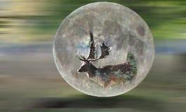 Мечтать луны Стоковые Изображения RF