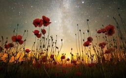 Мечта ночи середины лета Стоковое Изображение RF