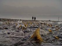 Мечта рыболова Стоковая Фотография RF