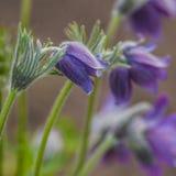 Мечта цветков травы Стоковое Фото