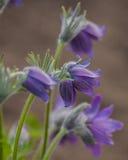 Мечта цветков травы Стоковая Фотография