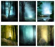 Мечты леса стоковые фотографии rf