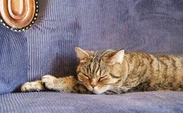 Мечты кота стоковые фото