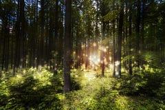 Мечт лес волшебства сцены Стоковая Фотография