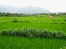 мечт зеленое scape Стоковые Фото