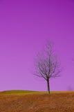 мечт земля Стоковая Фотография RF