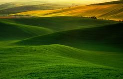 мечт зеленый цвет Стоковые Фотографии RF