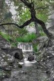 мечт зеленый цвет Стоковые Изображения