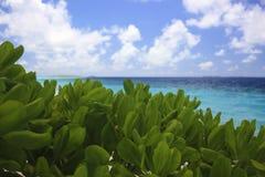 Мечт каникулы в тропическом рае Стоковое Изображение RF