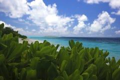 Мечт каникулы в тропическом рае Стоковое фото RF