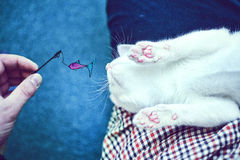 Мечт кот Стоковые Фотографии RF