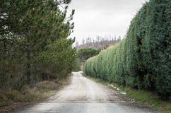 мечт дорога к Стоковая Фотография RF