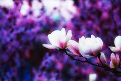 мечт пурпур стоковые фото