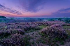 мечт пурпур Стоковая Фотография RF