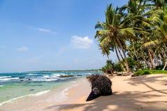 Мечт пляж на Индийском океане Стоковое Изображение