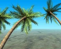 мечт тропическое Стоковое Изображение