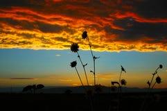 мечт merediths Стоковое Изображение RF