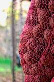 Мешок грецких орехов Стоковые Фото