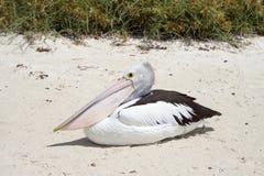 Мешок пеликана Стоковые Изображения