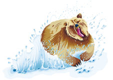 Медведь бежать в воде Стоковые Фото