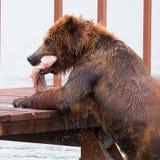 медведь есть рыб стоковое изображение rf
