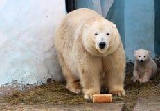 Медведь и ее новичок с ломтем хлеба Стоковое фото RF