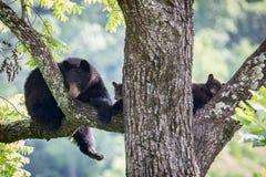 Медведь и Cubs матери Стоковое Изображение