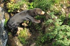 Медведь меда Стоковая Фотография
