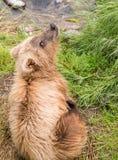 медведь младенца милый стоковое изображение