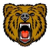Медведь рычать Стоковые Фотографии RF