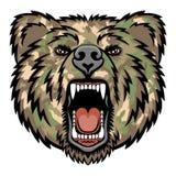 Медведь рычать Стоковые Изображения RF