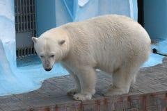 Медведь Стоковая Фотография