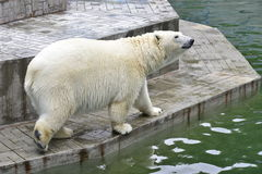 Медведь стоковое изображение rf