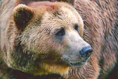 Медведь Стоковая Фотография RF