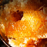 Мед в загоренном гребнем свете солнца Стоковая Фотография RF